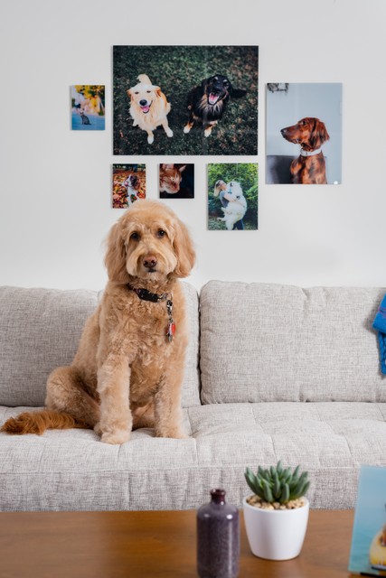 Display of pet pictures above a couch.