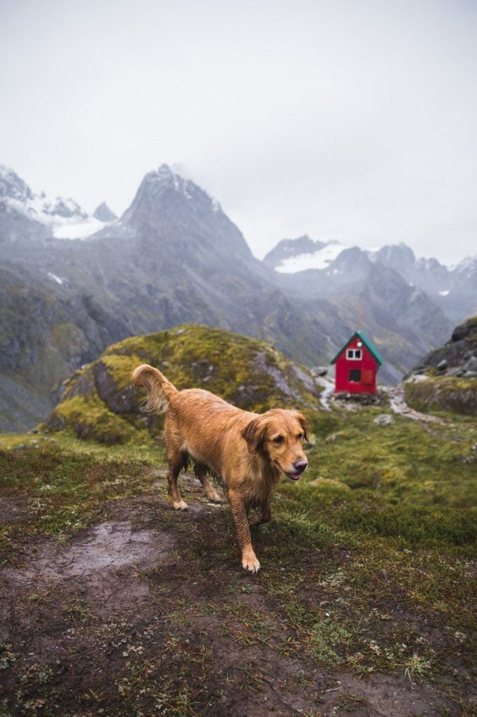 Photographing dogs in nature.