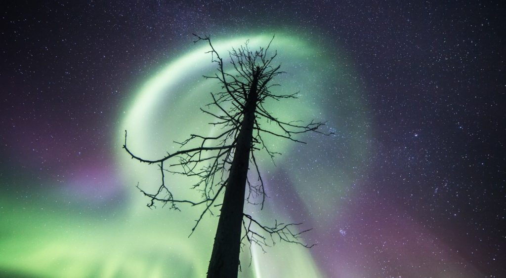The northern lights above a tree.