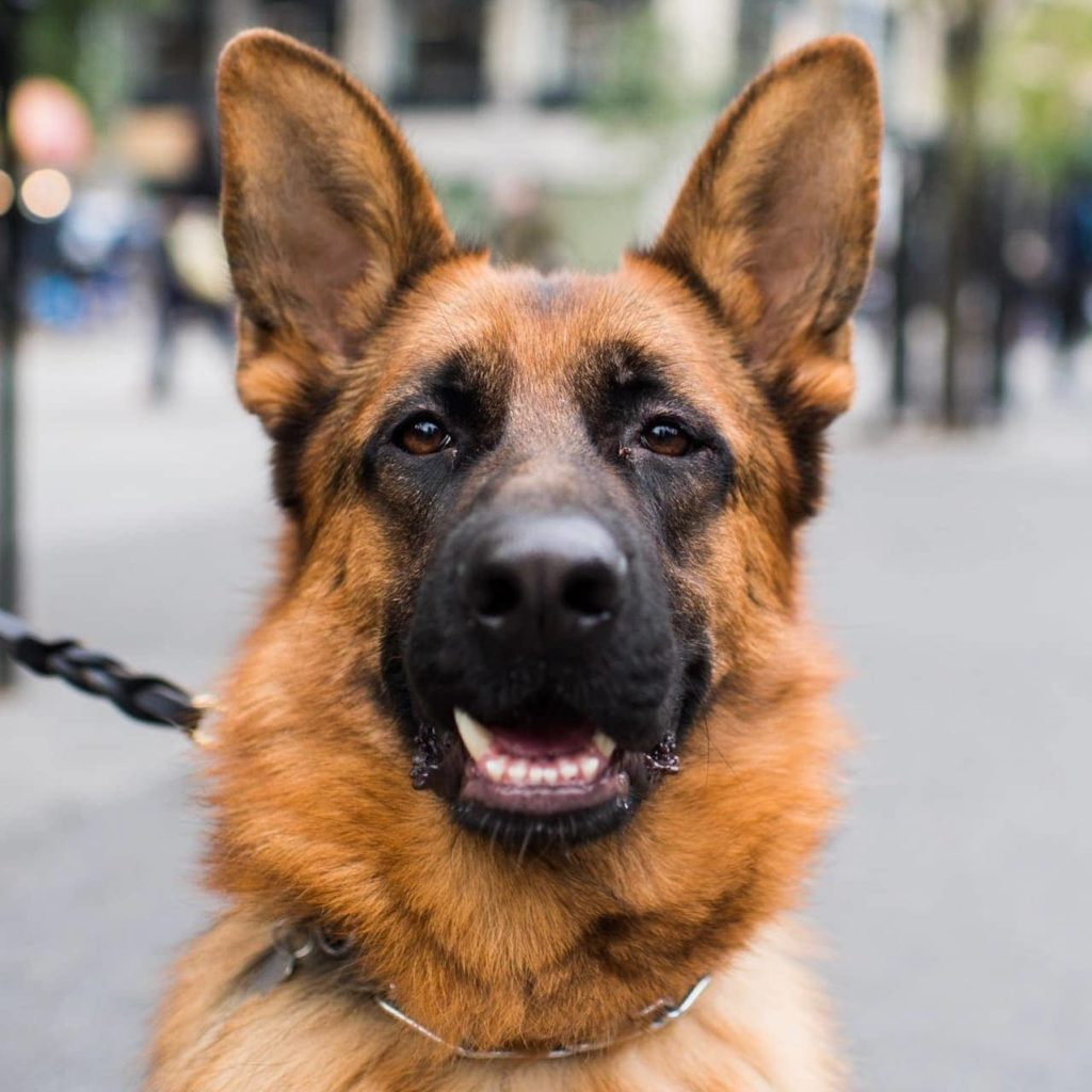 Dog portrait photography.