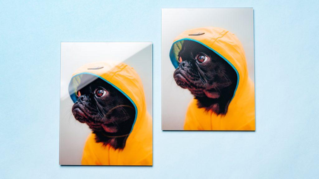 Matte glass print of dog in raincoat next to original glass print